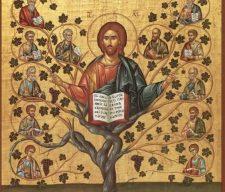jesus vine 12 dis