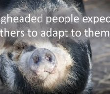 pigheaded-people-expect-you-to-adapt-to-them1