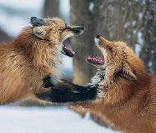 Nature mad angry parent conflict