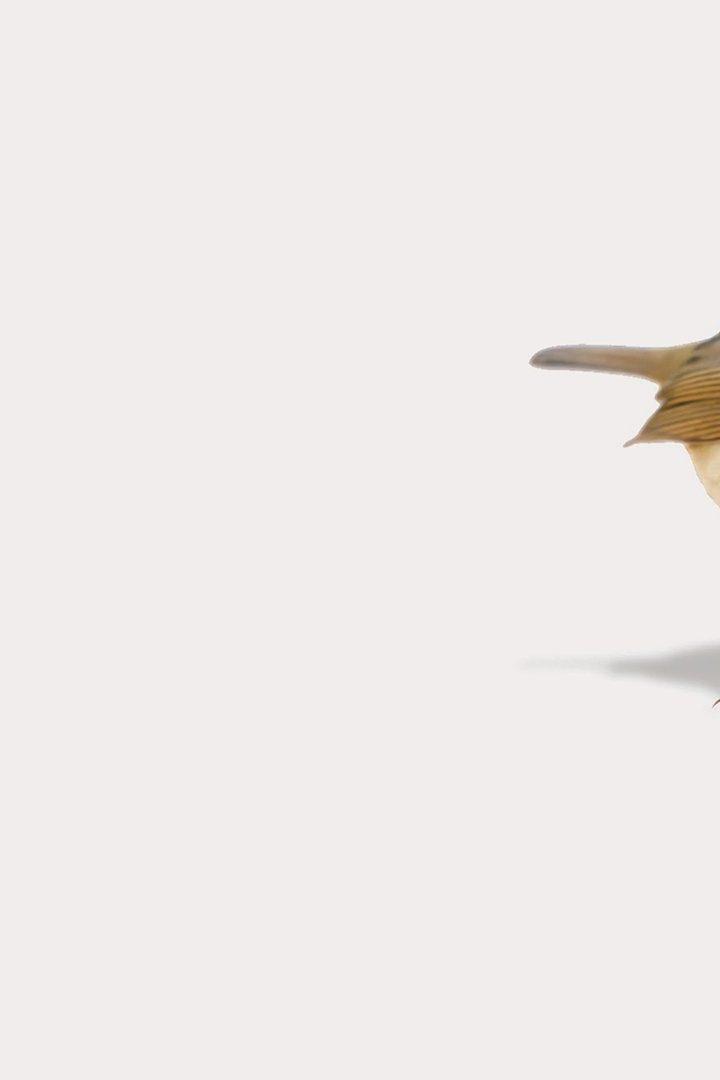 Sex bird bee