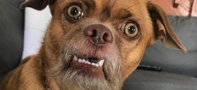 Surprise smile shocked dog